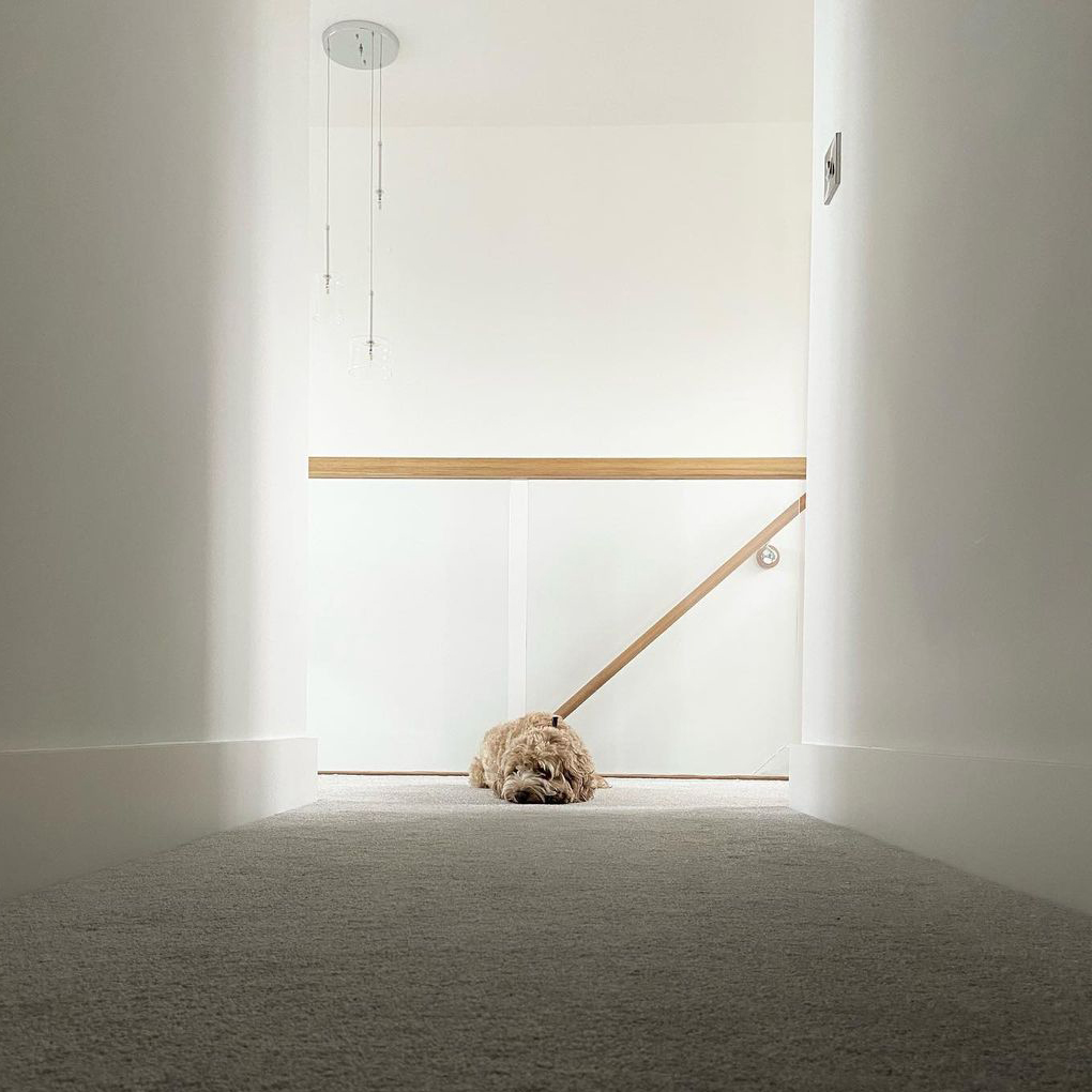 A dog lies on the carpet in front of a glass balustrade with oak handrail.